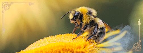 Krafttier Biene