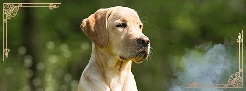 Krafttier Hund