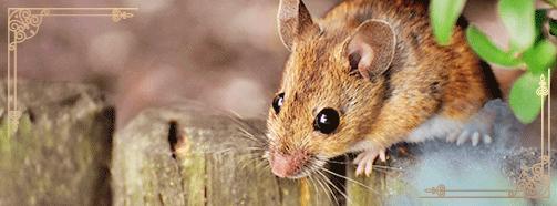 Krafttier Maus