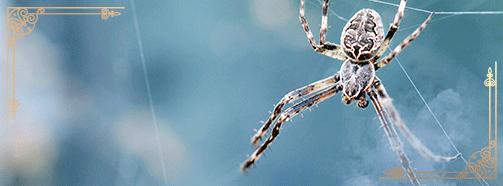 Krafttier Spinne