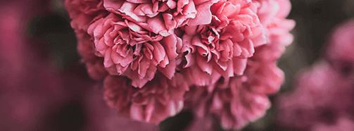 Bedeutung vom Traumsymbol Blumen